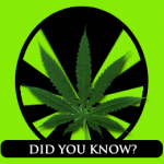 Marijuana Facts and Statistics