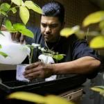Marijuana Growing Laws