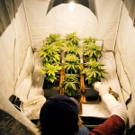 Marijuana Growing Methods